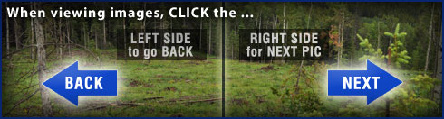 Click images on left or right side to navigate